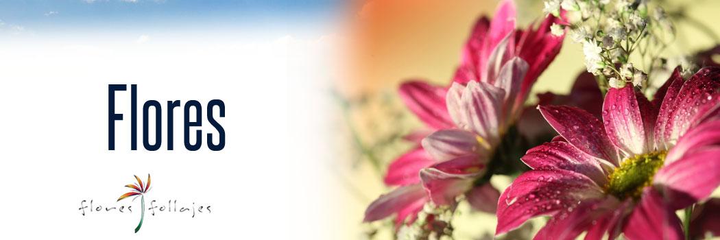 Las flores más hermosas para tu evento...